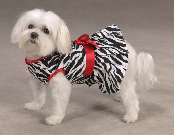 Dog Fashion Clothes: Will Give Stylish Look to Pets