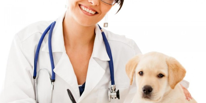How To Choose The Right Veterinarian For Your Dog