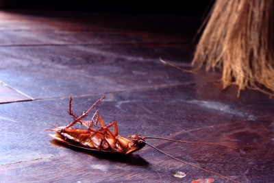 4 Tips For Getting Rid Of Pests