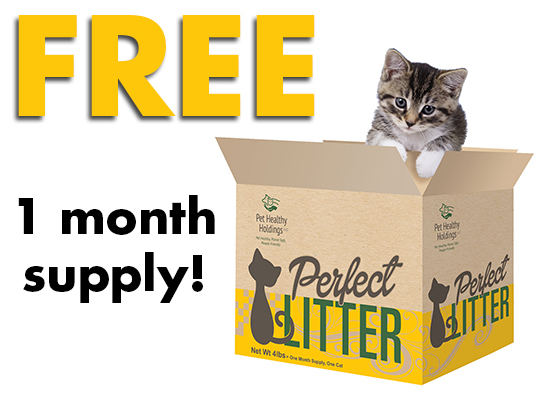 What Type Of Cat Litter Box Keeps Your Cat Healthy?