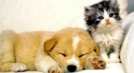 Safeguarding Your Pet's Health So You Have Peace Of Mind