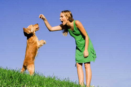 How Much Do Dog Trainers Make