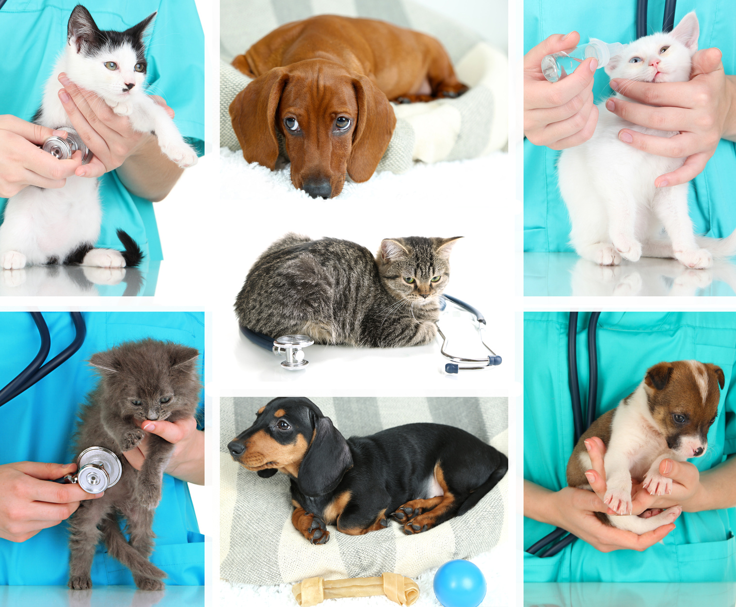 Why Is Pet Minding Essential? Advantages Of Pet Minding and Guide To Choose A Professional