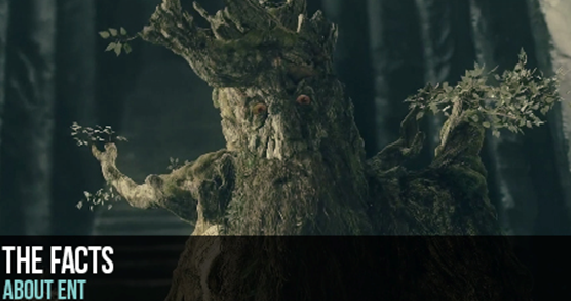 Things You Should Know About ENT